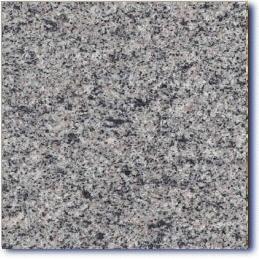 andorinha gray